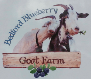bedford_blueberry